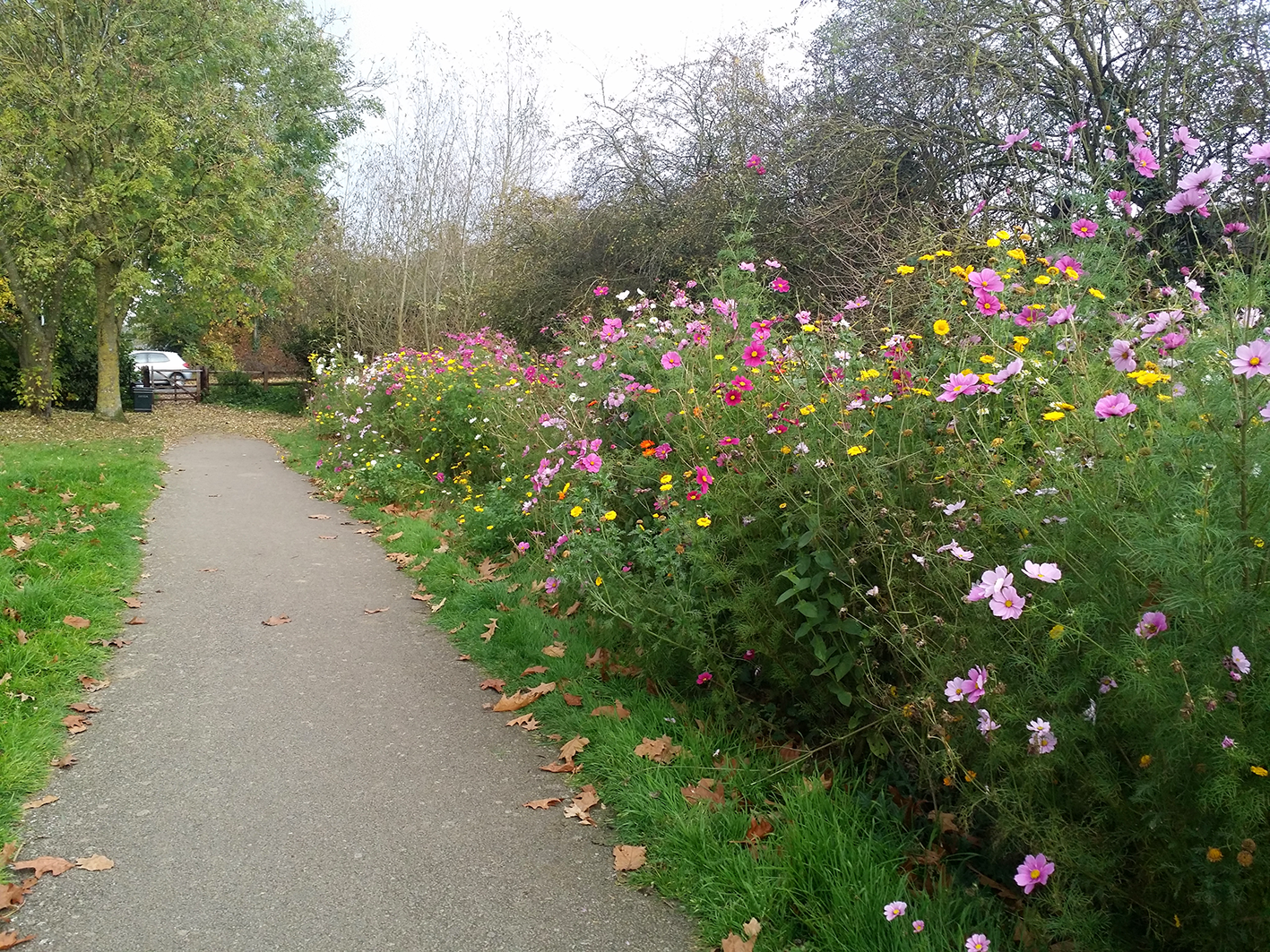 Wildflower feature gardens Northampton